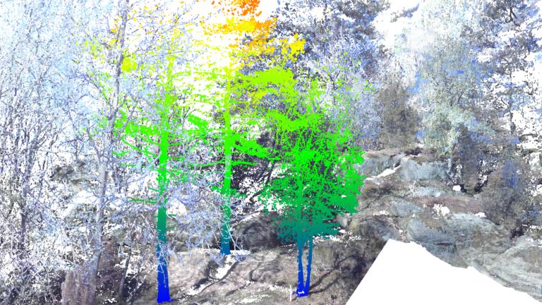3D-scanning av träd. Färgerna indikerar mätpunkternas, och därmed stammens, höjd över marken.